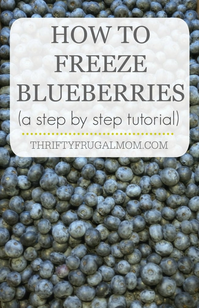 A photo tutorial on how to freeze blueberries