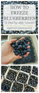How to Freeze Blueberries (a step-by-step tutorial)