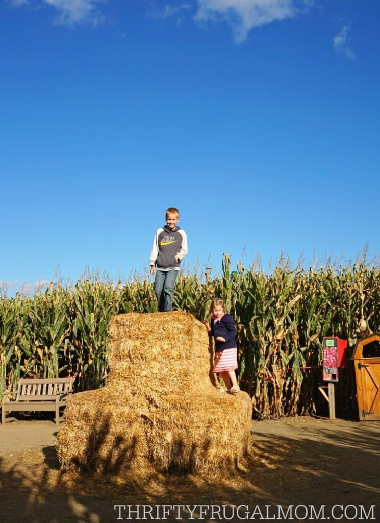 cherry-crest-adventuer-corn-maze4