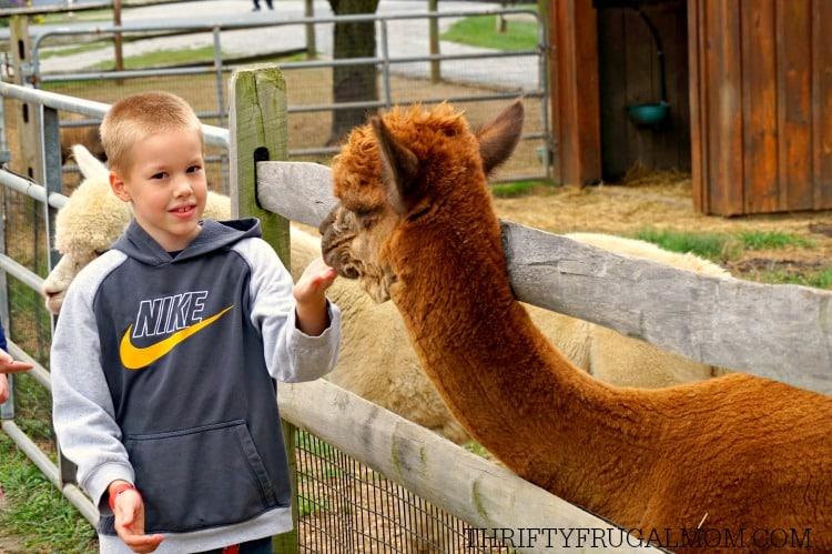 cherry-crest-adventure farm-petting-zoo-animals