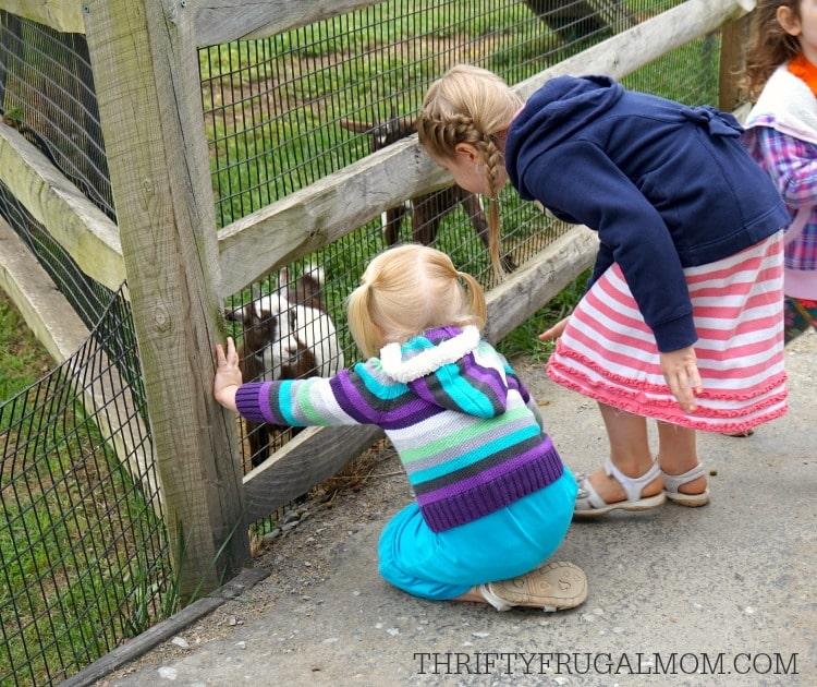 cherry-crest-adventure Farm-petting-zoo