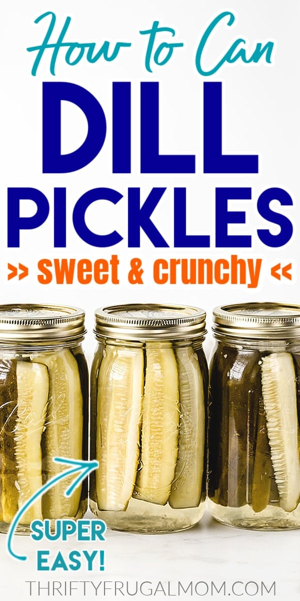 jars of home canned dill pickles lined up on a white table